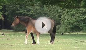 New Forest Country Walk - Fordingbridge - Woodgreen - Hale